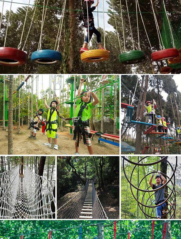 树上探险项目